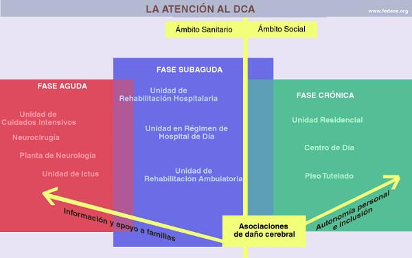 Fases da atención ao DCA